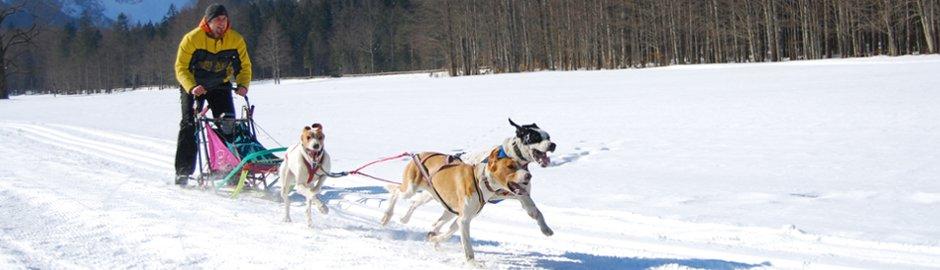 Dog sleds
